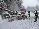 entwurzelter Baum über B38