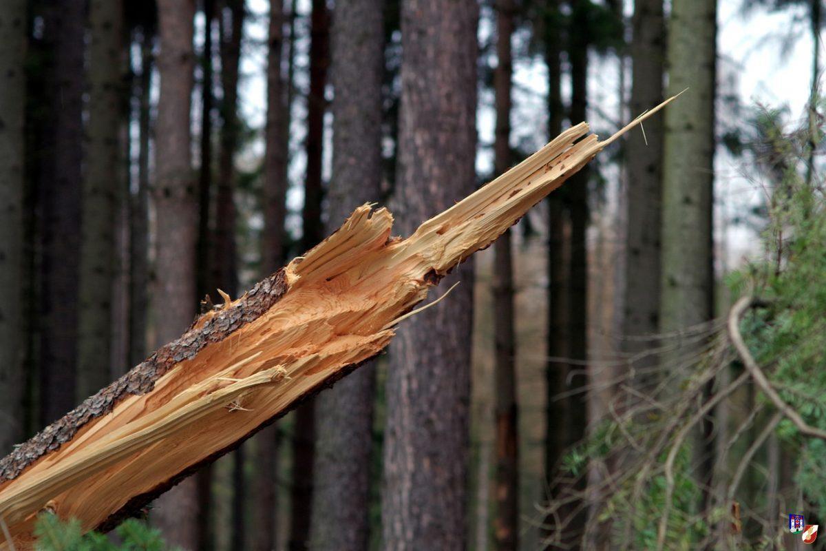 Tödlicher Forstunfall