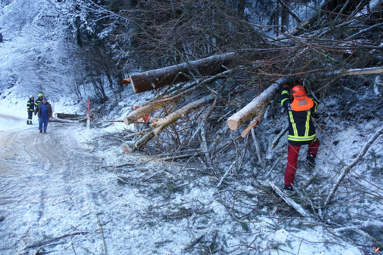 B38 durch mehrere Bäume blockiert
