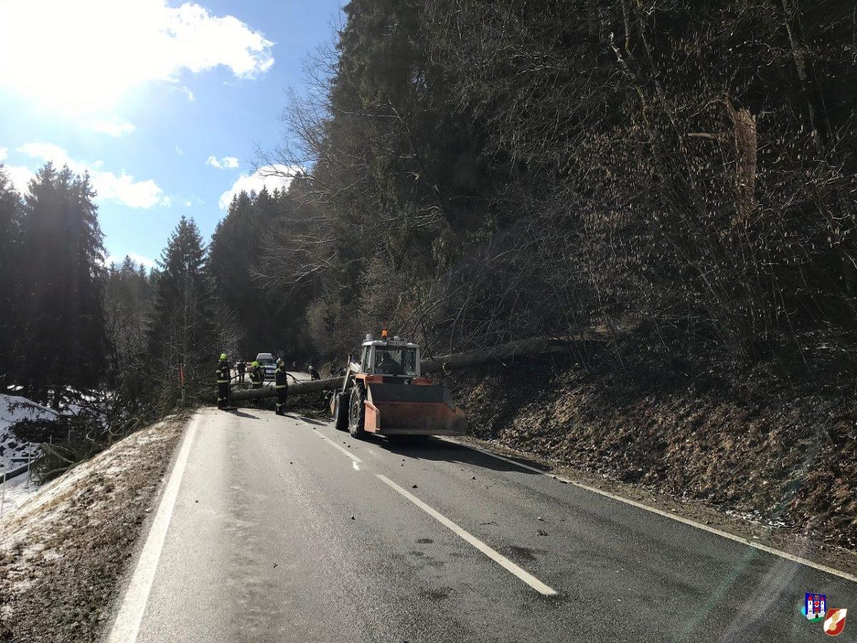 Straßenblockade durch abgerissenen Baum