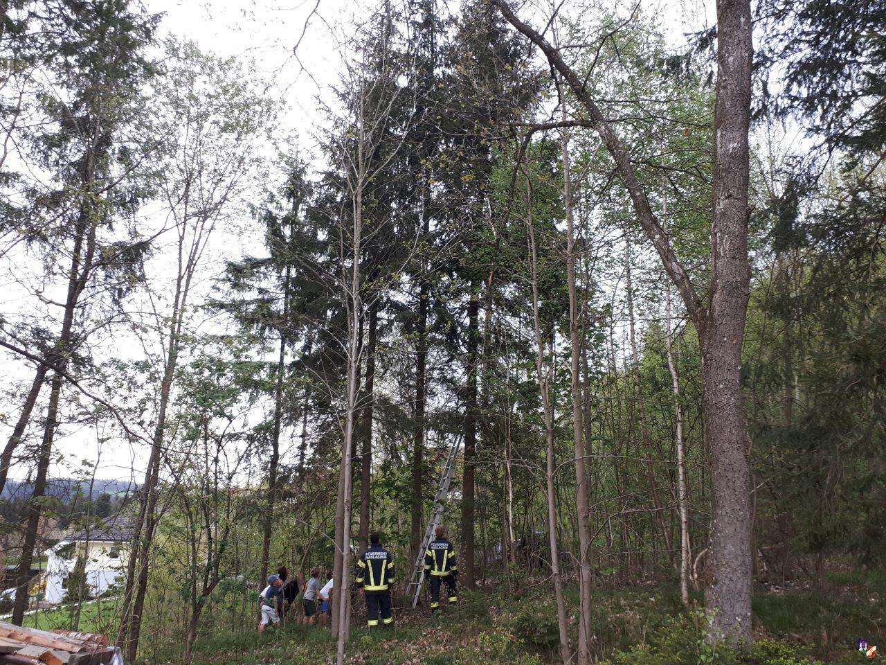 Katze vom Baum gerettet