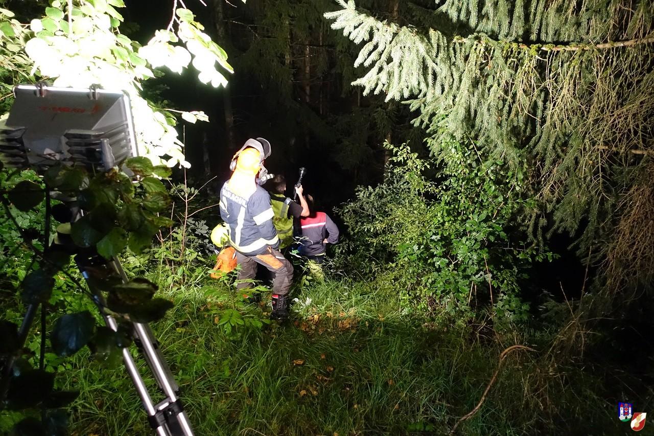 Baum aus Stromleitung entfernt