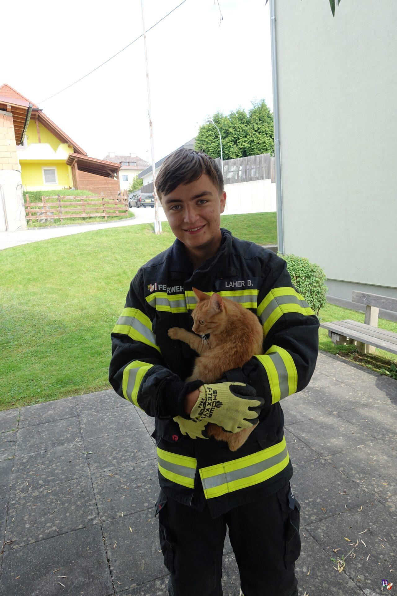 Tierrettung: Katze auf Baum